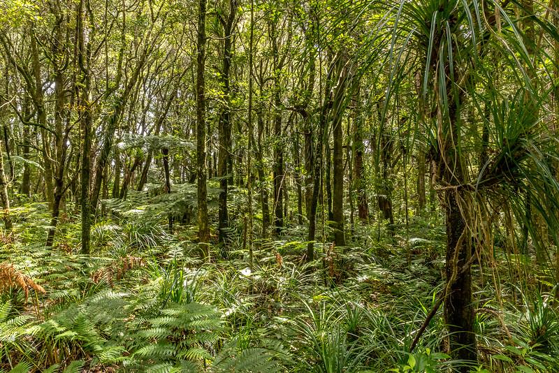 Im Trounson Kauri Reserve