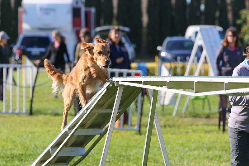 3-31-2018 Shetlant Sheepdog-2362.jpg