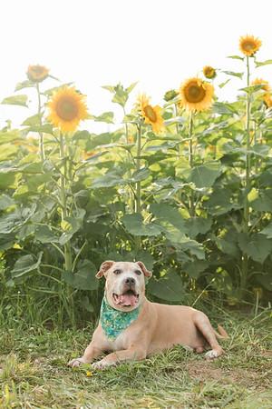 Lori & Pups
