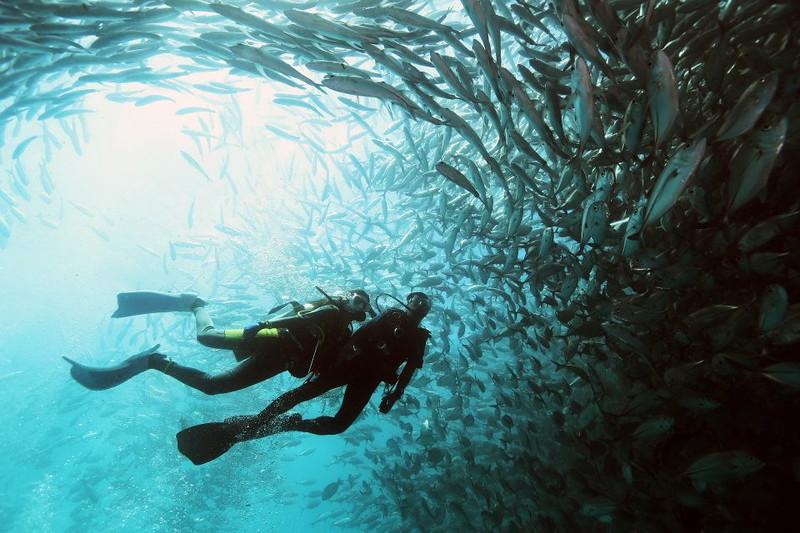 Sabah-diving-Borneo-divers.jpg