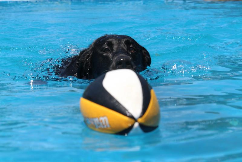 2015.8.6 Winnebago County Fair Dock Dogs (10).JPG