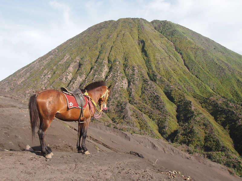P4166992-horse-looking-at-mt-batok.JPG