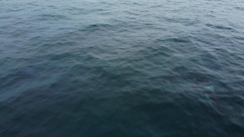 orca_1.mp4