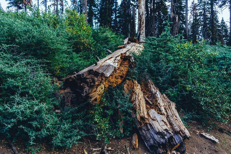 Rui in Sequoia-06989.jpg