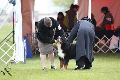 Sweeps 9-12mo Puppy Bitch BMDCA 2010