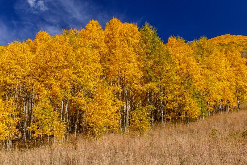 Autumn Aspen along Ophir Road