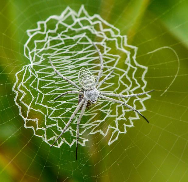 Orb-Weaver-Spider-web-decoration.jpg