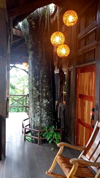 """""""TARZAN"""" -- MY TREE HOUSE"""