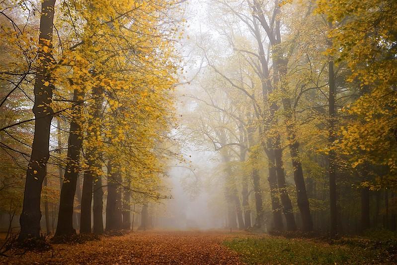 Groenendaal - Autumn-Hallway