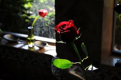 Still Lifes & Flowers
