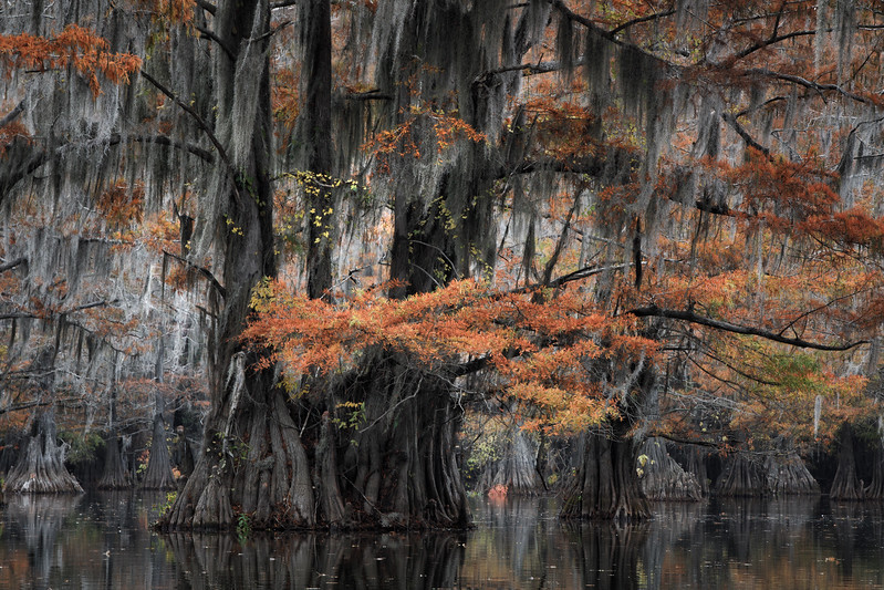 Cypress_Swamps_1117_PSokol-1124-Edit-2.jpg