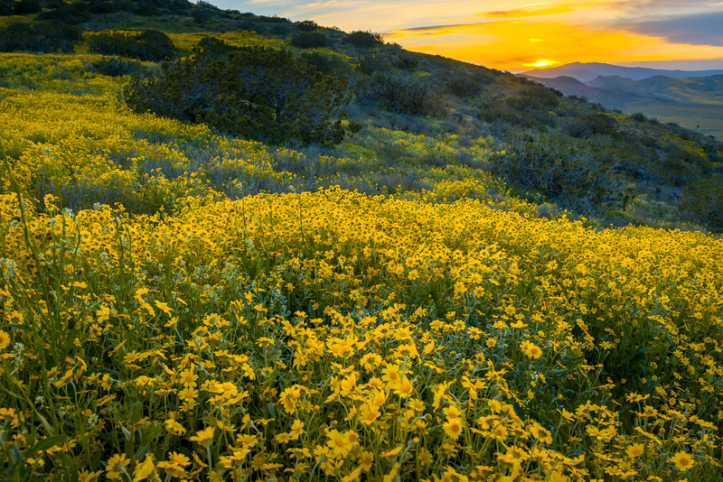 Sunset in the hills above the Carrizo Plain.