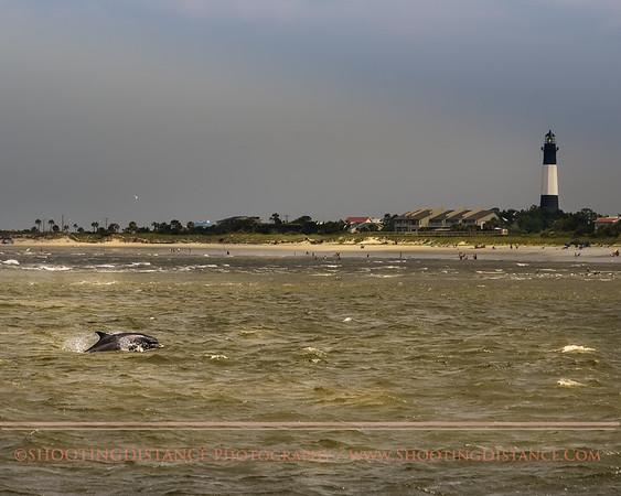 Dolphin leaping, near Tybee Island Lighthouse, GA