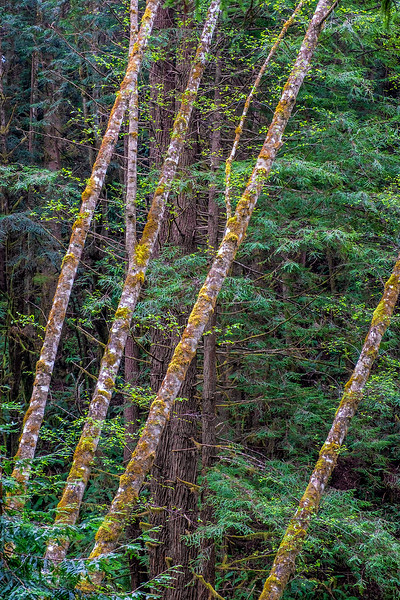 Streelow Trail