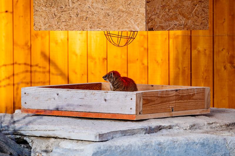 Tonis Zoo-0385.jpg