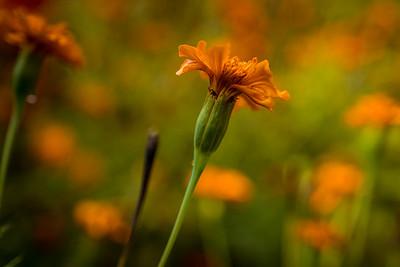 Last of the flowers at Cheekwood
