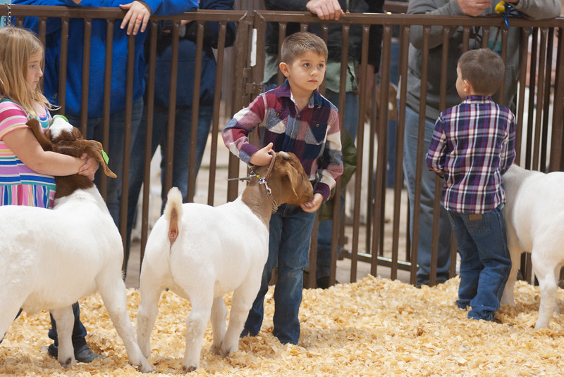 kay_county_showdown_goats_20191207-1.jpg