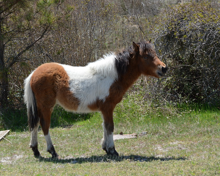 Young horse 1 05_01_18.JPG