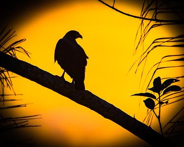 BIRDS & CRITTERS-COSTA RICA