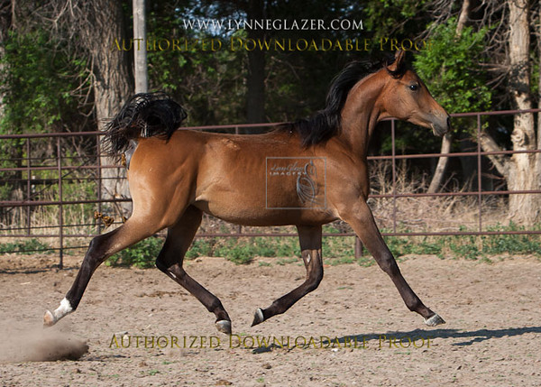 Fast38-3991 (was genius filly)