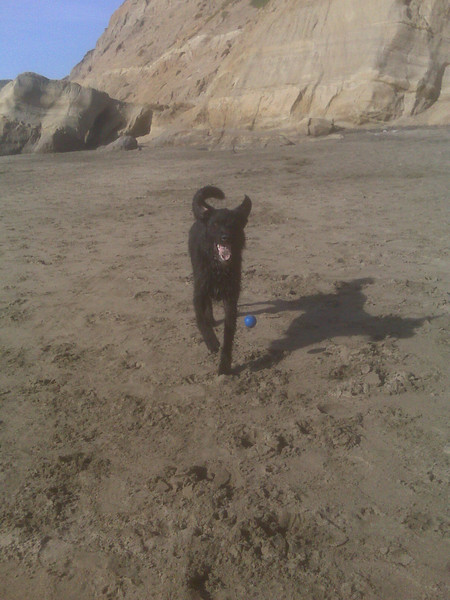 001_lucky_at_ft_funston.jpg