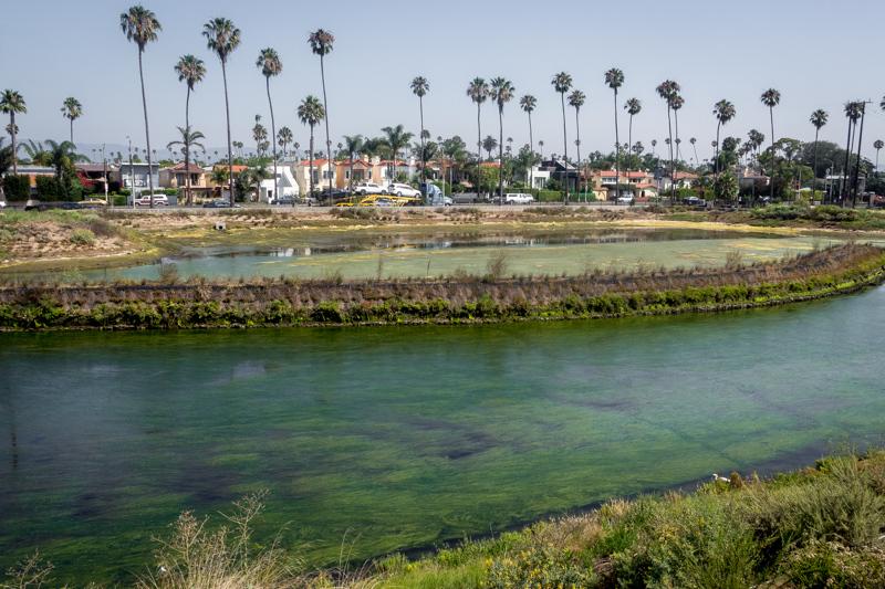 July  15 - Oxford Lagoon, Marina del Rey, CA.jpg