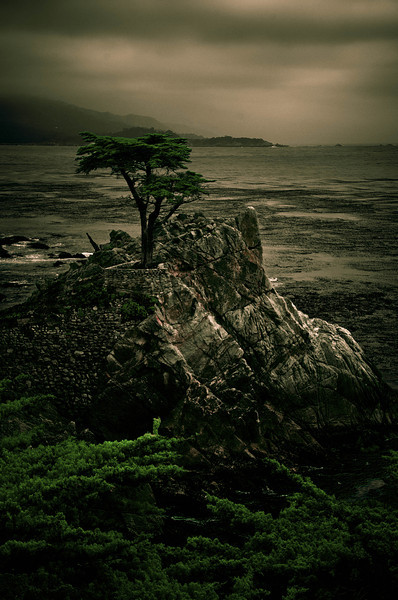 The Lone Cypress, Monterey, CA, USA
