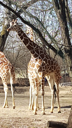 Brookfield Zoo in March