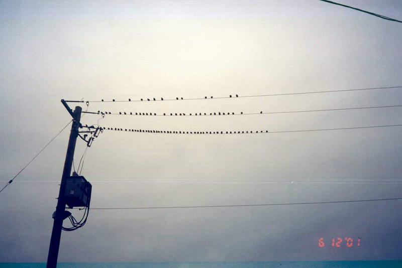 Birds on Wires.jpg
