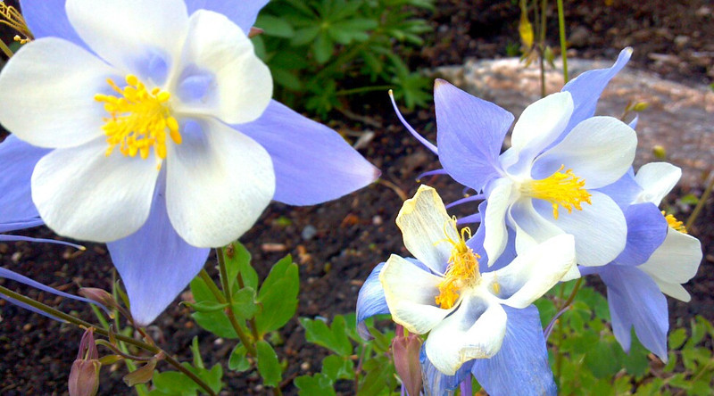 Cell phone pic of Columbine