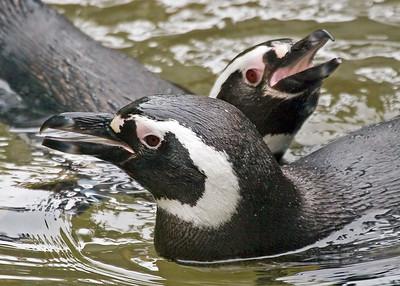 Point Defiance Zoo & Aquarium: Aquarium