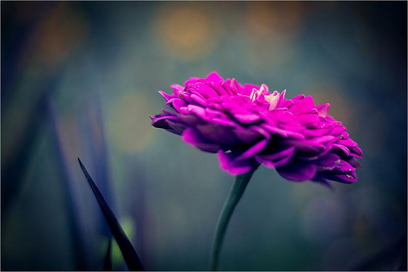20111015_Flower11.jpg