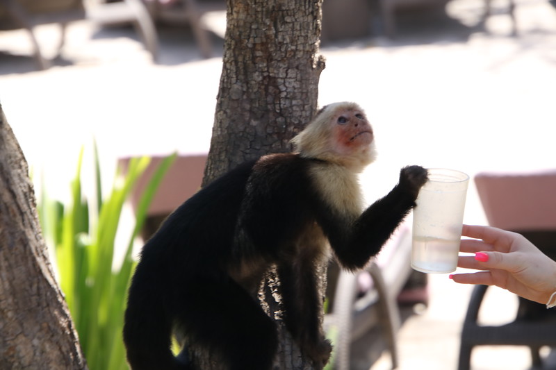 2020 Costa Rica 0208.JPG