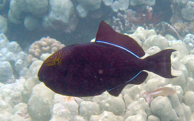 499- 20080416- Hawaii 20-Snorkelling IMG_0729.jpg