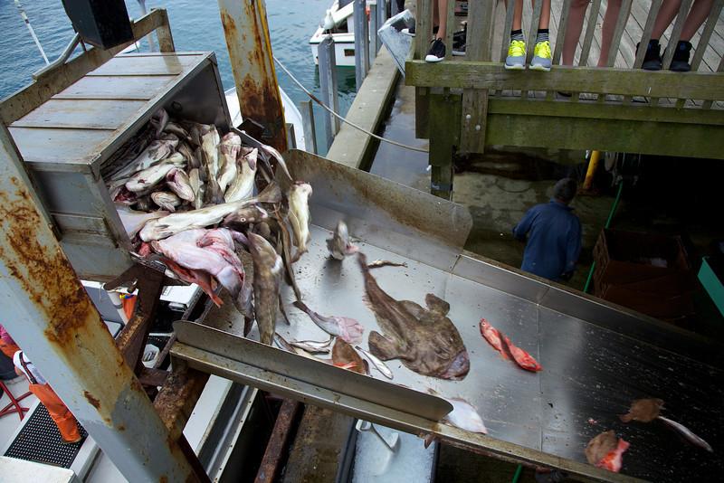 Cape Cod 2011 94.jpg