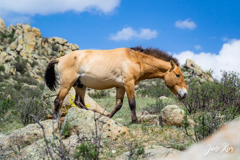 Kustei National Park__6109509-Juno Kim.jpg
