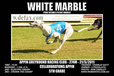Appin Greyhounds - 21st May 2011