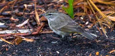 19-Sept North America Birds-4301.JPG