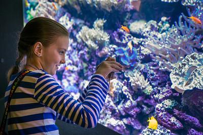 Seattle Aquarium-  Child Visitors