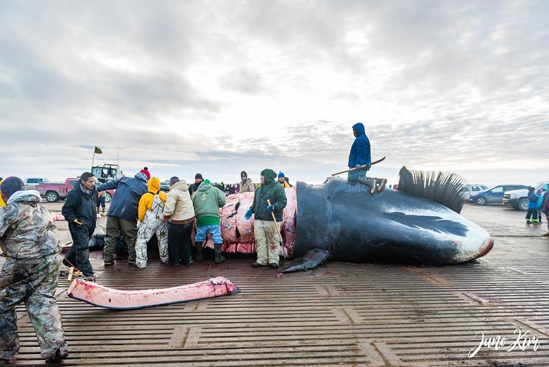 Utqiagvik Whaling-6104862-Juno Kim.jpg
