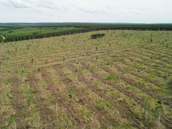 Aerials Nova Scotia Forest Cutting