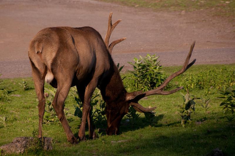african safari Park-Canada-9.jpg