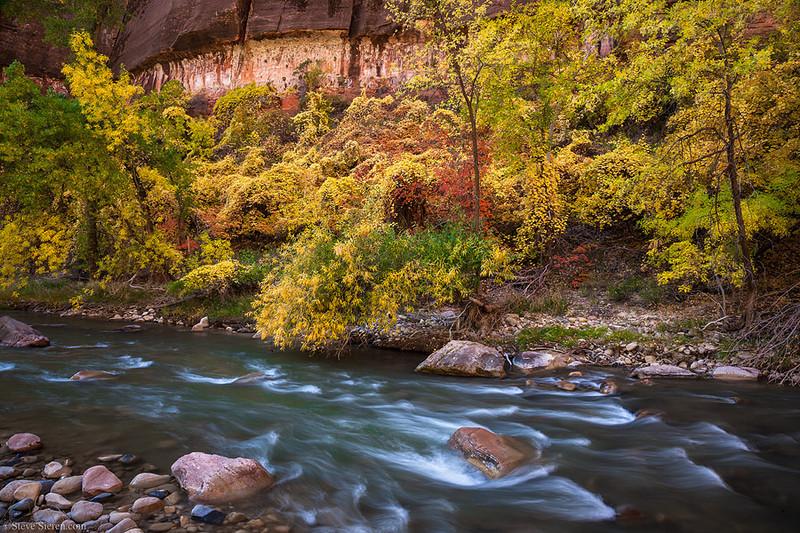 Virgin River Fall Color Zion