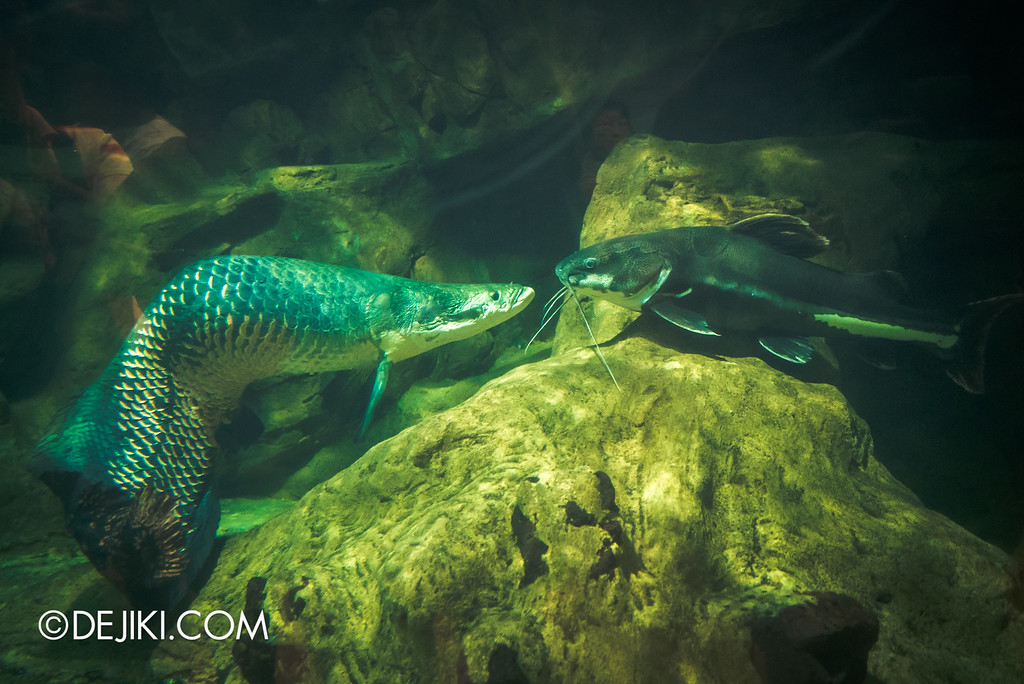 Underwater World Singapore - Inside living fossils 2