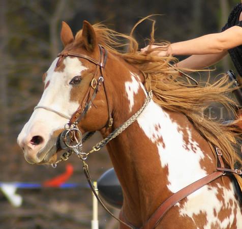 CMS Horses