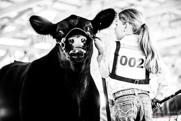 Ringshots - Steers