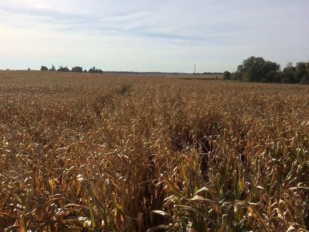 2014 Kuiper's Family Farm Corn