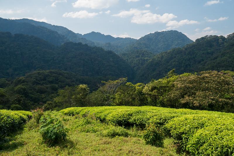 Nyugwe-Rwanda-10.jpg