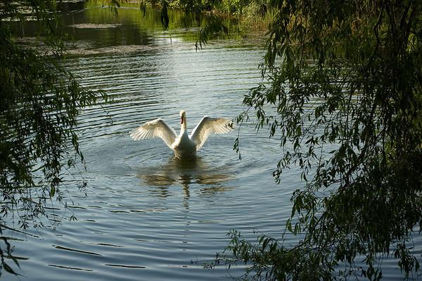 The Birds / Fuglene