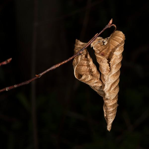 DSC_4967 2 Fall Leaves in Spring PS- LL +++++.jpg